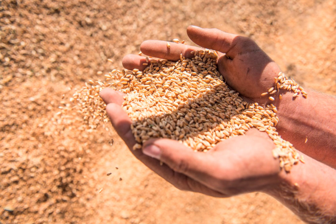 Ardent Mills sustainable grains