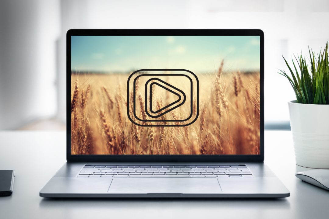 video highlighting wheat facts