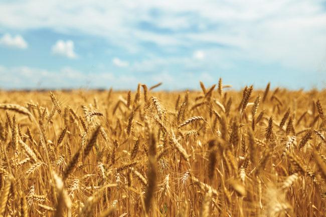 Grains_Adobestock