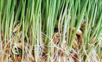 Sproutedgrains_adobestock