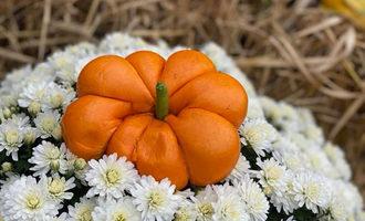 Thebagelnook pumpkin