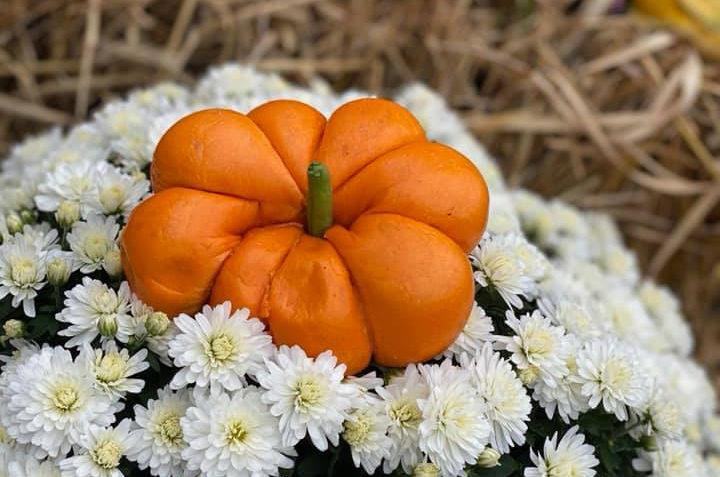 TheBagelNook_Pumpkin