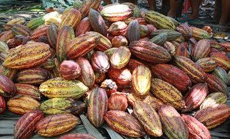 Cacoabarry cocoahorizons